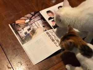 「平井ねこのいえ」掲載のNyAERA