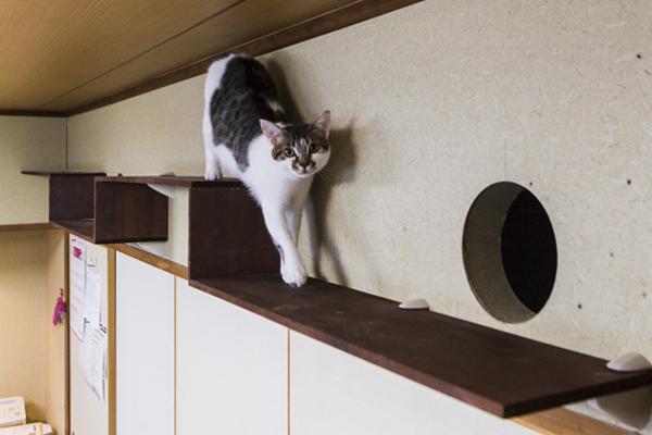 2019年2月20日、「猫との住まいアドバイザー®〔Basic〕」資格認定講座開催